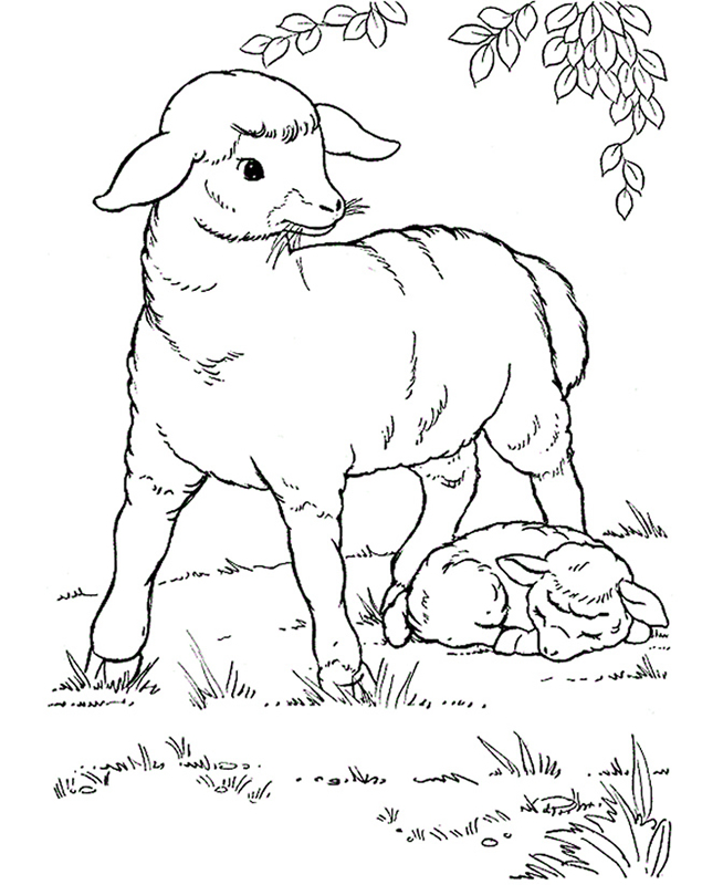 Sheep without a Shepherd Coloring Page